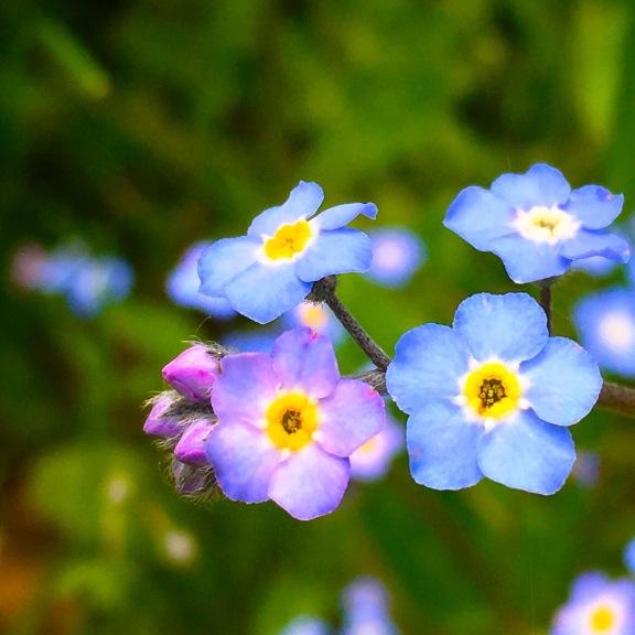 Haiku About Wildflowers