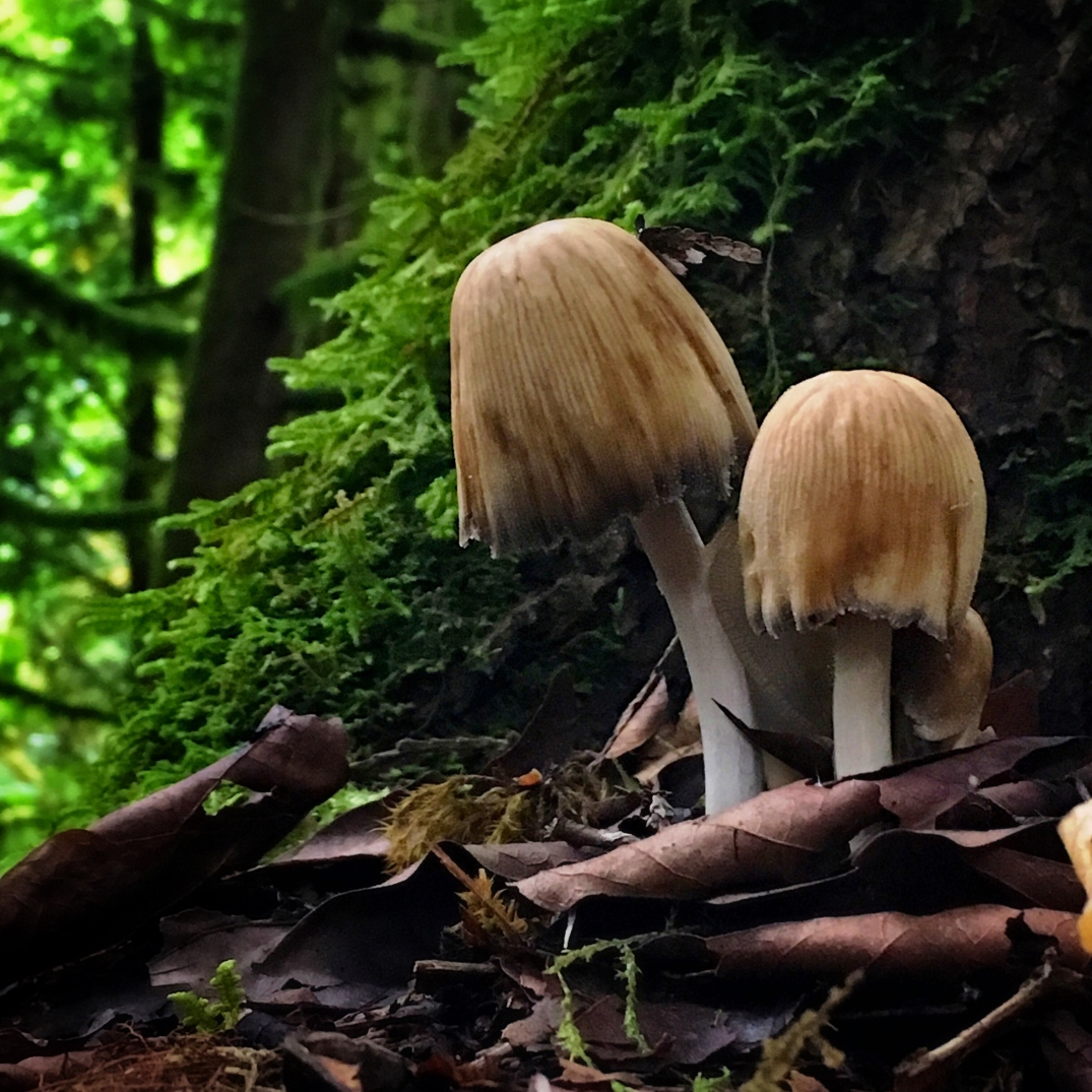 mushrooms in washington